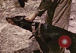 Image of First Division Marines Peleliu Palau Islands, 1944, second 26 stock footage video 65675022907