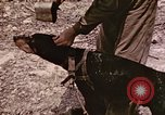 Image of First Division Marines Peleliu Palau Islands, 1944, second 27 stock footage video 65675022907