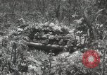 Image of 5th Marines Division Peleliu Palau Islands, 1944, second 30 stock footage video 65675022945