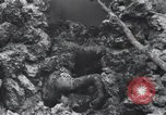 Image of 81st Army Division firing on sniper Peleliu Palau Islands, 1944, second 59 stock footage video 65675022967