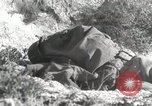 Image of 142nd Infantry Regiment Italy, 1944, second 21 stock footage video 65675022974