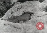 Image of 142nd Infantry Regiment Italy, 1944, second 22 stock footage video 65675022974
