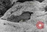 Image of 142nd Infantry Regiment Italy, 1944, second 23 stock footage video 65675022974