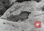 Image of 142nd Infantry Regiment Italy, 1944, second 24 stock footage video 65675022974
