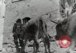 Image of 143nd Infantry Regiment Italy, 1944, second 44 stock footage video 65675022975