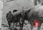 Image of 143nd Infantry Regiment Italy, 1944, second 45 stock footage video 65675022975