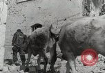 Image of 143nd Infantry Regiment Italy, 1944, second 46 stock footage video 65675022975