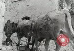 Image of 143nd Infantry Regiment Italy, 1944, second 47 stock footage video 65675022975