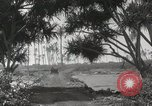 Image of Mountainous landscape Hawaii USA, 1916, second 61 stock footage video 65675023078
