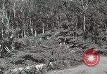 Image of Mountainous landscape Hawaii USA, 1916, second 62 stock footage video 65675023078