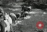 Image of Government workers plant trees Yacolt Washington USA, 1934, second 17 stock footage video 65675023133