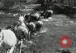 Image of Government workers plant trees Yacolt Washington USA, 1934, second 19 stock footage video 65675023133