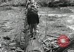 Image of Government workers plant trees Yacolt Washington USA, 1934, second 23 stock footage video 65675023133