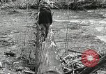Image of Government workers plant trees Yacolt Washington USA, 1934, second 27 stock footage video 65675023133