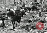 Image of Government workers plant trees Yacolt Washington USA, 1934, second 28 stock footage video 65675023133