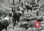 Image of Government workers plant trees Yacolt Washington USA, 1934, second 32 stock footage video 65675023133