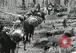 Image of Government workers plant trees Yacolt Washington USA, 1934, second 34 stock footage video 65675023133
