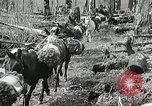 Image of Government workers plant trees Yacolt Washington USA, 1934, second 35 stock footage video 65675023133