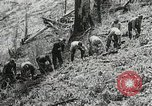 Image of Government workers plant trees Yacolt Washington USA, 1934, second 36 stock footage video 65675023133