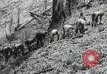 Image of Government workers plant trees Yacolt Washington USA, 1934, second 37 stock footage video 65675023133