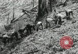 Image of Government workers plant trees Yacolt Washington USA, 1934, second 38 stock footage video 65675023133