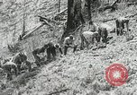 Image of Government workers plant trees Yacolt Washington USA, 1934, second 39 stock footage video 65675023133