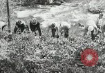 Image of Government workers plant trees Yacolt Washington USA, 1934, second 40 stock footage video 65675023133