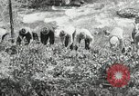 Image of Government workers plant trees Yacolt Washington USA, 1934, second 41 stock footage video 65675023133