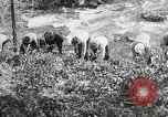 Image of Government workers plant trees Yacolt Washington USA, 1934, second 42 stock footage video 65675023133