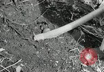 Image of Government workers plant trees Yacolt Washington USA, 1934, second 45 stock footage video 65675023133