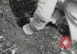 Image of Government workers plant trees Yacolt Washington USA, 1934, second 47 stock footage video 65675023133