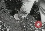 Image of Government workers plant trees Yacolt Washington USA, 1934, second 48 stock footage video 65675023133