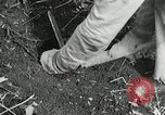 Image of Government workers plant trees Yacolt Washington USA, 1934, second 51 stock footage video 65675023133