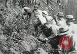 Image of Government workers plant trees Yacolt Washington USA, 1934, second 56 stock footage video 65675023133