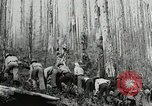 Image of Government workers plant trees Yacolt Washington USA, 1934, second 59 stock footage video 65675023133
