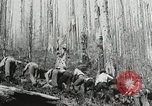 Image of Government workers plant trees Yacolt Washington USA, 1934, second 60 stock footage video 65675023133