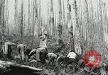 Image of Government workers plant trees Yacolt Washington USA, 1934, second 61 stock footage video 65675023133