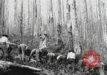 Image of Government workers plant trees Yacolt Washington USA, 1934, second 62 stock footage video 65675023133