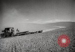 Image of Wheat or Allied Forces Walla Walla Washington USA, 1944, second 7 stock footage video 65675023160