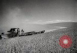 Image of Wheat or Allied Forces Walla Walla Washington USA, 1944, second 10 stock footage video 65675023160
