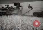 Image of Wheat or Allied Forces Walla Walla Washington USA, 1944, second 13 stock footage video 65675023160