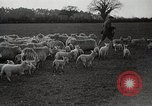 Image of Spring time London England United Kingdom, 1938, second 41 stock footage video 65675023175
