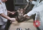 Image of Chimpanzee for spacecraft testing United States USA, 1960, second 26 stock footage video 65675023323