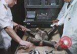 Image of Chimpanzee for spacecraft testing United States USA, 1960, second 27 stock footage video 65675023323
