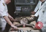 Image of Chimpanzee for spacecraft testing United States USA, 1960, second 28 stock footage video 65675023323