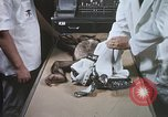 Image of Chimpanzee for spacecraft testing United States USA, 1960, second 36 stock footage video 65675023323