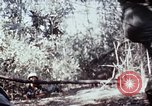 Image of jungle trail Vietnam, 1968, second 59 stock footage video 65675030468