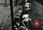 Image of jobs at factories in America during Great Depression United States USA, 1932, second 28 stock footage video 65675030527