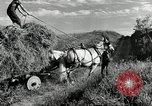 Image of Truck loaded with hay Saint Clairsville Ohio USA, 1940, second 13 stock footage video 65675030604