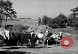 Image of Truck loaded with hay Saint Clairsville Ohio USA, 1940, second 41 stock footage video 65675030604